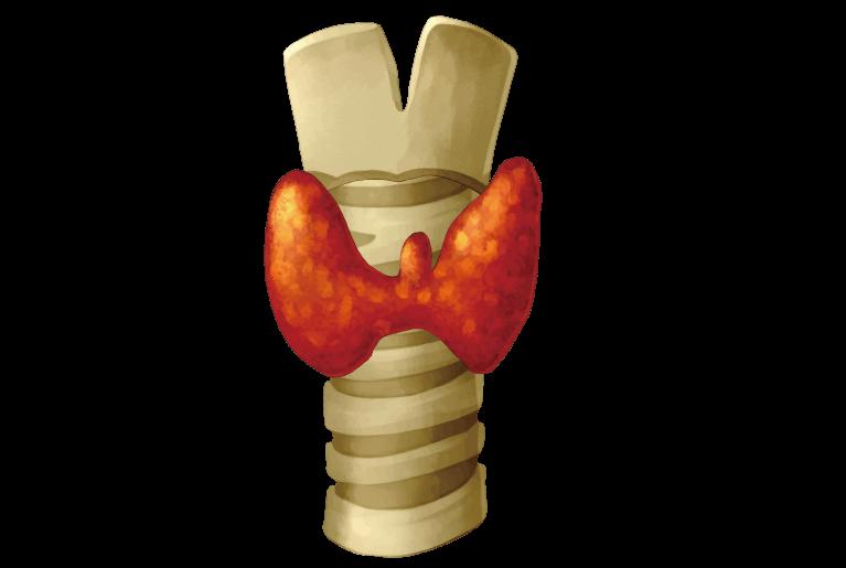 甲状腺の95%は良性のしこり